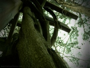 looking up the vine