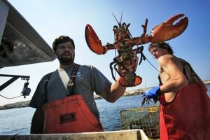 Lobstermen holding lobster