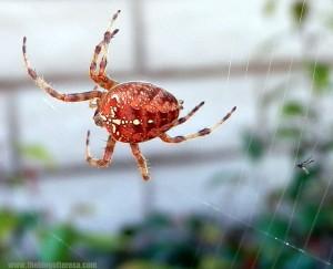 spider (shudders)