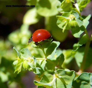 LadyBug (but i don't know if it is a girl or boy}
