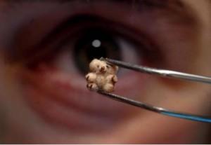 """World's Smallest Teddy Bear German artist Bettina Kaminski's """"Mini the Pooh,"""" at just 5 mm tall, is the world's smallest Teddy Bear!"""