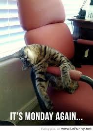 Cat sleeps in chair in Vet waiting room