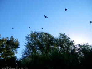 Murde Of Crows