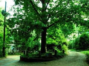 """Treethatownsitself"" by Bloodofox at English Wikipedia - Transferred fromen.wikipediato Commons.. Licensed under Public Domain via Wikimedia Commons - http://commons.wikimedia.org/wiki/File:Treethatownsitself.jpg#/media/File:Treethatownsitself.jpg"