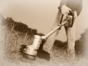 Weed-Eater-2