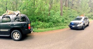 In this photo taken on May 18, 2015, provided by Connor Zuvich, police personnel approach an SUV with a large stuffed tiger on its roof, in Camas, Wash. The sight of it lashed to the top of the SUV cruising around a southwest Washington lake was enough to generate a 911 call from someone who apparently thought it was real. (Connor Zuvich via AP)