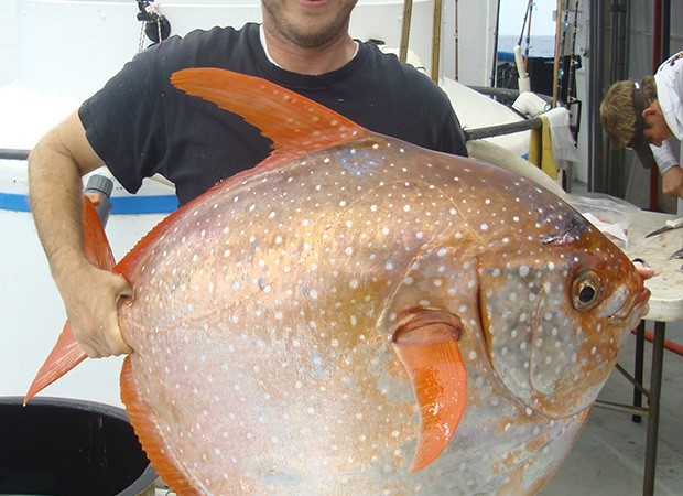Southwest Fisheries Science Center biologist Nick Wegner holds captured opah. NOAA FISHERIES, SOUTHWEST FISHERIES SCIENCE CENTER