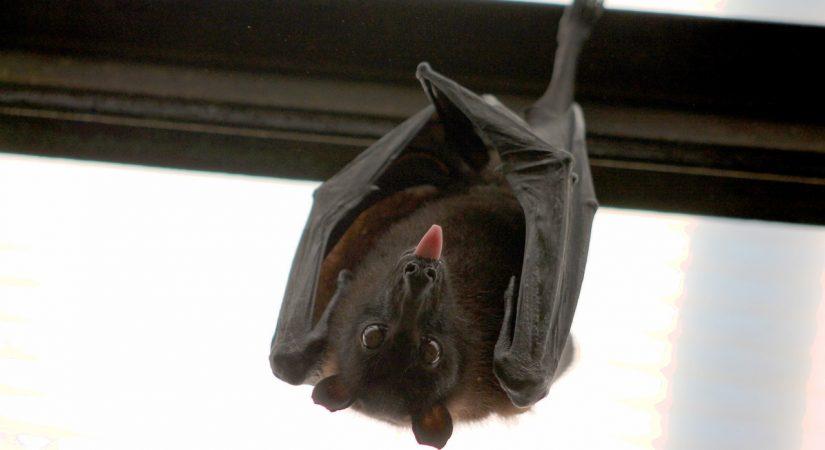 Batpire