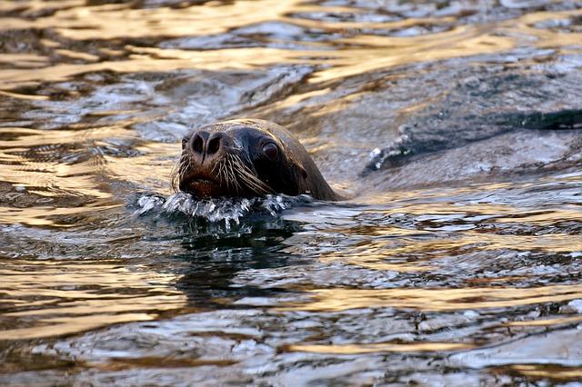 sea lions www.craftedbytw.com